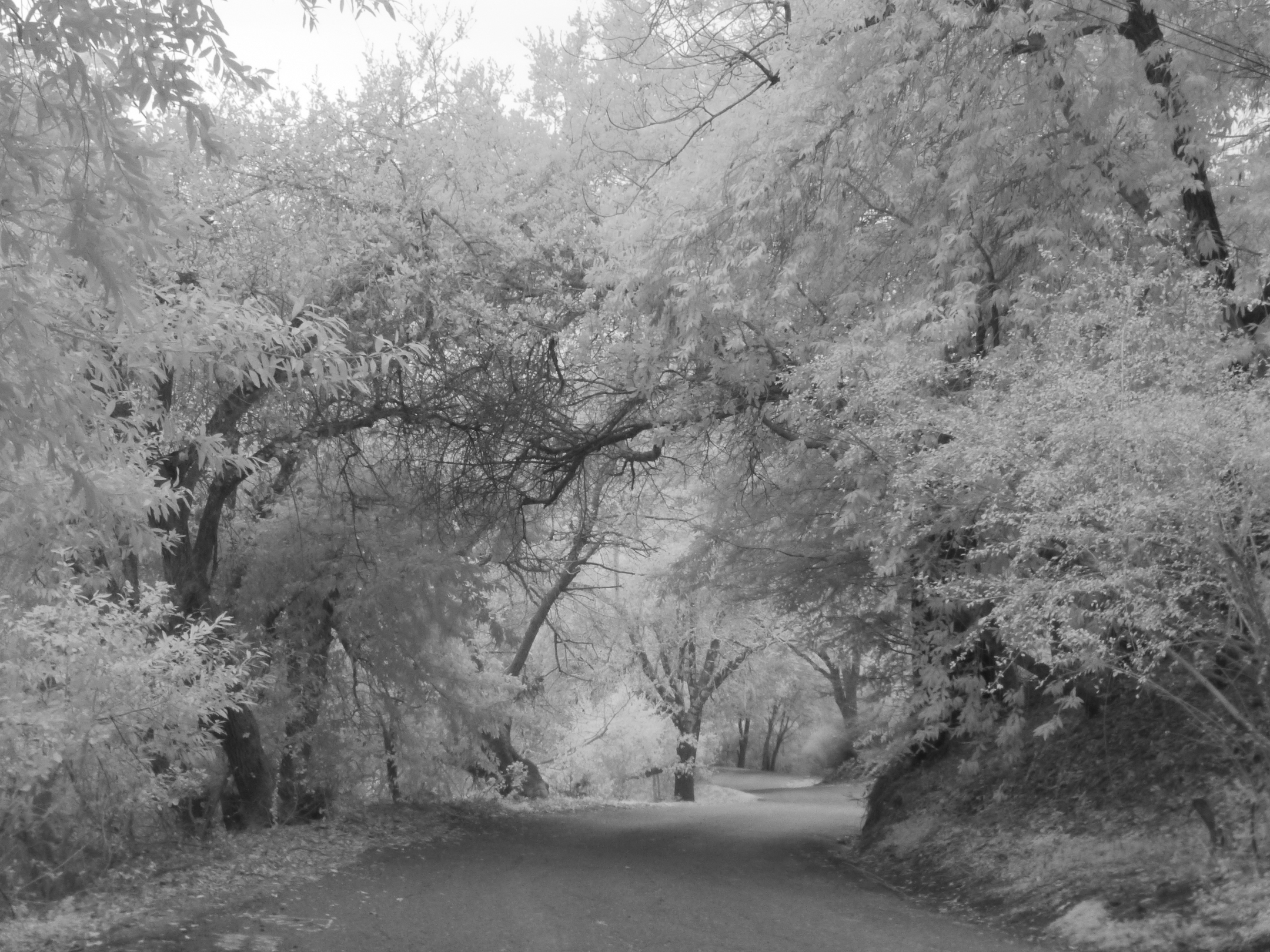 Toyon Road infrared